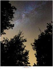 De Melkweg (nandOOnline) Tags: tree night forest star bomen nacht nederland boom lucht bos hemel constellation melkweg donker milkyway rips astronomie sterren sterrenbeeld nbrabant stippelberg sterrenstelsel