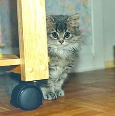 00381 (d_fust) Tags: cat kitten gato katze 猫 macska gatto fust kedi 貓 anak katt gatito kissa kätzchen gattino kucing 小貓 고양이 katje кот γάτα γατάκι แมว yavrusu 仔猫 का बिल्ली बच्चा