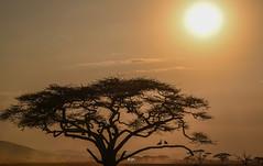 DSC_3038 (Jorge kaplan) Tags: nikon nikkor d750 28300mm africa safari tanzania serengeti nationalpark park paisaje landscape