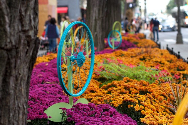 I Like the Blue Flowers