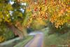 Hatfield Forest (Eldorino) Tags: park uk morning autumn trees nature forest sunrise landscape countryside nikon britain centre jour hatfield bishops stortford essex hertfordshire stanstead hatfieldforest