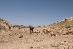 DSC_1559 (vasiliy.ivanoff) Tags: voyage trip travel tour petra jordan journey traveling neareast الأردن البتراء петра иордания ближнийвосток الشرقالاوسط خاورنزدیک המזרחהקרוב