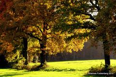 Naturfarben (grafenhans) Tags: light landscape licht sony laub herbst feld 55 tamron blatt landschaft bäume baum slt farben lichtung 281750 slt55