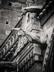 20151006-0117-Edit (www.cjo.info) Tags: blackandwhite bw paris france building monochrome animal stone fauna architecture digital blackwhite europe stonework religion gothic olympus carving notredame gargoyle software technique zuiko oldbuilding europeanunion westerneurope hteldeville frenchgothic ledelacit geolocation churchcathedral m43 cathdralenotredamedeparis mythicalcreatures religiousbuilding 4tharrondissement 4mearrondissement geocity silverefexpro microfourthirds geocountry camera:make=olympusimagingcorp mzuiko geostate exif:make=olympusimagingcorp geo:lon=234942 exif:aperture=53 silverefexpro2 m43mount exif:lens=olympusm40150mmf4056r olympusmzuikodigitaled40150mmf4056r nikcollection olympusomdem10 exif:isospeed=500 exif:focallength=123mm camera:model=em10 exif:model=em10 geo:lat=48853473333333