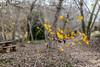 Autumn (canonixus1) Tags: otoño autumn sierra bosque banyeres mariola canon6d canonixus1 canon5014 hojas amarillo marron