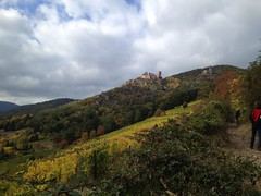 (amelie.c.schillings) Tags: weinberg wine travel alsace france nature natur frankreich wein vin