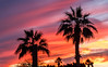 Palm Trees Sunset (http://fineartamerica.com/profiles/robert-bales.ht) Tags: arizona foothills forupload haybales palm people photo places plants projects scenic states sunrisesunset sunrise sunset street palmtree southwest red yellow landscape silhouette clouds desert twilight sunrays orange nature beautiful colorful bright stunning mountain morning sensational spectacular cirrus southwestern horizon sonoran panoramic awesome magnificent peaceful surreal sublime magical spiritual inspiring inspirational tranquil sunlight wallpaper yuma robertbales