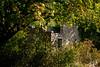 Maison en ruines /  House in ruins- Saint-Léger-du-Ventoux (christian_lemale) Tags: saintlégerduventoux verdure greenery arbres trees nature extérieur outdoor provence france nikon d7100 maison house ruine ruin