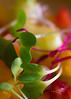 Macro-salad view (IMG_0716-2) (JRCmoreno) Tags: oranges orangepeeled yellow strawberry red fruits berries salad fruitsalad crackers macro green purple sprouts juicy naturallight