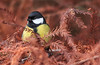 © Naturaleza cercana 2017 (Jesus Portal) Tags: jesusportal canon tele obj70300 color aves paisajenatural serie naturaleza naturalezacercana tamron 60d animalplanet eos bird 2016 primavera spring asturias