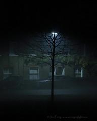 _C0A6751REWS In the Light, © Jon Perry, 6-12-16 zax (Jon Perry - Enlightenshade) Tags: jonperry enlightenshade arranginglightcom 61216 20161206 fog night darkness tree chiswick london