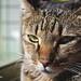 untitled (Tzung-Sian Yang) Tags: taiwan cat nikon d5200