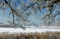 snow blossoms (cu♥re di marmo) Tags: frost winter trees white lake frozen sunny blue egglburgersee ebersberg bavaria bayern