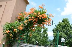 DSC_7614 (rushmurad) Tags: kahmir india dal lake kashmiri