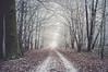 go ahead (JS-photographie) Tags: fuji fujifilm fujinon fujix x100 landscape landschaft natur saarland germany deutschland winter trees bäume wald forest nebel fog trails wege