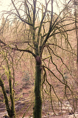 Dunkeld Hermitage 2017-05687 (garypatersondesign) Tags: dunkeld perthshire perth scotland forest trees