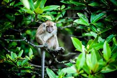 monkeys-1010