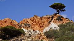 DSC03283-Praia da Falésia, Portugalia (dreptacz) Tags: praiadafalésia portugalia kolory sony slt lustrzanka krajobraz niebieski zielony brazowy piasek niebo trawa krzaki widok natura algavre plaża sonyflickraward