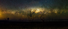 Milky Way Setting Below the Horizon (inefekt69) Tags: panorama stitched mosaic ptgui milky way cosmology southernhemisphere cosmos southern westernaustralia australia dslr longexposure rural nightphotography nikon stars astronomy space galaxy astrophotography outdoor milkyway core great rift ancient sky 35mm d5100 landscape cataby lake trees deadtree setting explore explored