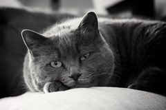 Ma petite Virgule... (D@rkne§§260) Tags: chat cat catwoman virgule bw