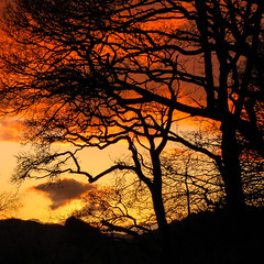 Machlud haul, Machynlleth. ( Sunset ) 3 (Alan Hughes Mach) Tags: cymru wales uk powys machynlleth machlud machludhaul goldenhour trees silhouette branches twigs wood woodland colour dramatic nightfall dusk twilight evening sundown halflight eventide gloaming vesper montgomeryshire sirdrefaldwyn golden bright sunlight natural gold winter cielo contrast paysage outside landschaft panasonic lumix tz60 sunset tree woods sky nature natur naturaleza landscape red black yellow orange fire wolken himmel ciel baum