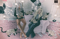 #779 Kitty Day (Vicky Therion Macnelly) Tags: catwahead maitreya besom~ petitemort treschic efmposes va