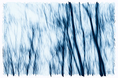 Trees in Blue (Quincey Deters) Tags: march ©quinceydeters allrightsreserved canada nature outdoor 2017 abstract blurredmotion intentionalcameramovement icm motionblur colourimage lines verticallines art fineart photoart flora tree northamerica alberta rural evening winter sunset dusk blue black