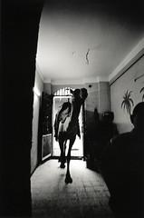 walter_rothwell_photography_652 (walter_rothwell) Tags: walter rothwell photography giza egypt blackandwhite fuji neopan400 film nikonf6 analog monochrome darkroom