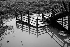 반영 / Reflection (Daegeon Shin) Tags: nikon d4 nikkor 50mm 50mmf18 bw water agua pond estanque deck winter invierno 니콘 니콘렌즈 흑백 corea jinju korea 물 reflejo reflection 연못 강주연못 데크 겨울 진주 경남