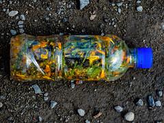 Message In A Bottle (Steve Taylor (Photography)) Tags: messageinabottle police bottle petals dirt flowers blue brown yellow orange green plastic pebble stone newzealand nz southisland canterbury christchurch cbd city plant reflection
