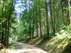 DSCF0833 (JohnSeb) Tags: trees tree forest germany deutschland rboles bosque arbre schwarzwald baum fort badenweiler johnseb bumen eurotour2012