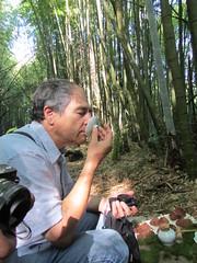 Nickel June2015 (23) (Alan A. Lew) Tags: ruili taiwan alishan 2015