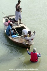 A view of Rescue Campaign of Indus River Dolphins - Bilal Javaid