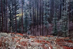 Autunno in Pratomagno (fotografia per passione) Tags: autumn forest canon herbst tuscany toscana toscane bos autunno casentino arezzo pratomagno valdarno fors boschi arezzotoscana leforestedelpratomagno marksoetebierphotography leforestecasentinesi