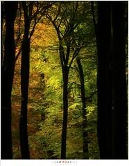 Struggle between red and green (nandOOnline) Tags: groen herfst nederland natuur bos zon silhouet landschap bruin zonlicht gelderland drie beuk solsegat herfstbladeren speulderbos beukenboom beukenblad