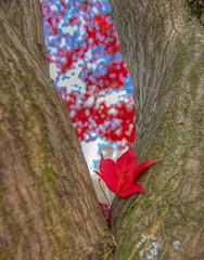 (chrishowardphotography.com) Tags: autumncolors autumntrees autumninthepark autumninohio
