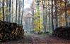 Revier Stolpe  Herbst 2015 Forstamt Tegel (Forstamt Pankow / Berliner Forsten) Tags: berlin herbst hund frau wald bäume weg hotz stämme sträucher berlinerforsten forstamttegel revierstolpe
