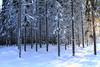 Forest harvesting_2012_01_24_0040 (FarmerJohnn) Tags: winter snow pine forest canon finland forestry stack lumi pino talvi spruce firewood plywood harvester metsä laukaa 24105 лес зима снег ель mänty tukki pulpwood kuusi сосна polttopuu valkola дрова фанера canoneos7d metsänhoito vaneri harvesteri petruma kuitupuu комбайн стек forestharvesting juhanianttonen metsänkorjuu лесозаготовок лесноехозяйство балансоваядревесина hitonmäki canonef2410540isusm