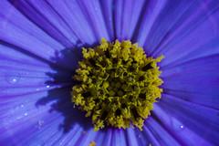 DSC02104_edited_edited (François wry) Tags: motif jaune eau violet coeur pistil illusion effect flou étoile drap petale illusiondoptique