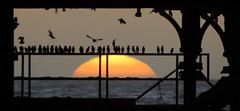 Watching the sun go down (Sue Wolfe) Tags: autumn sunset sea nature birds wales pier westwales wildlife cymru aberystwyth ceredigion nightfall starlings welshcoast aberystwythpier flockofstarlings starlingsflocking starlingsroost welshwildlifebreaks