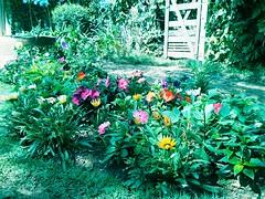 Nosso jardim