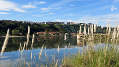 IMG_8661 (49Carmelo) Tags: reflejo ria suances orillas eucaliptos arbolado plumeros