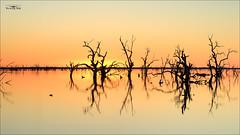 Golden Sunset at Menindee Lakes (Young Ko) Tags: sunset sky sun nature yellow composition landscape golden interesting nikon colorful dusk atmosphere harmony lonely menindee menindeelake photographyreflection