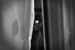 Sneak (Neuro74) Tags: blackandwhite black cat flickr award gatto neroamet