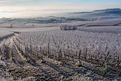 les vignes prisent dans le givre (Romain Guilhot) Tags: alsace ballon canon eos40d fra france vosges ciel contraste couleurs nuage vallée vignes