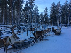 Cozy up on a romantic reindeer ride
