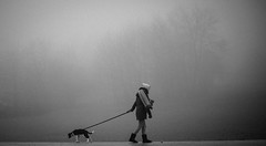 Different Directions (mripp) Tags: dog hund tiere tier animal animals fog foggy weather wetter outside nature art kunst sony alpha7rii leica 50mm summicron grey grau dark black white mono monochrom schwarz weiss haustier