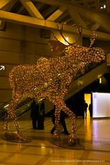 Caribou des Halles (David-photopixel-bzz) Tags: décoration lumière extérieur boules sapin noël fête paris canon sigma les halles châtelet
