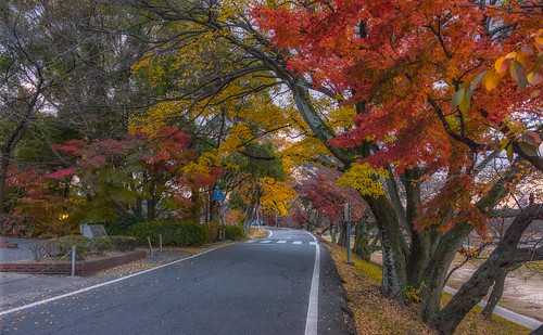 Autumn Leaves along the Road