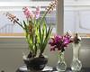 En la cocina (Micheo) Tags: flores flowers vase jaron luz light bulbos jacintos cambio change growing envejecer gettingold nuevo viejo bouquet jarron snapdragon